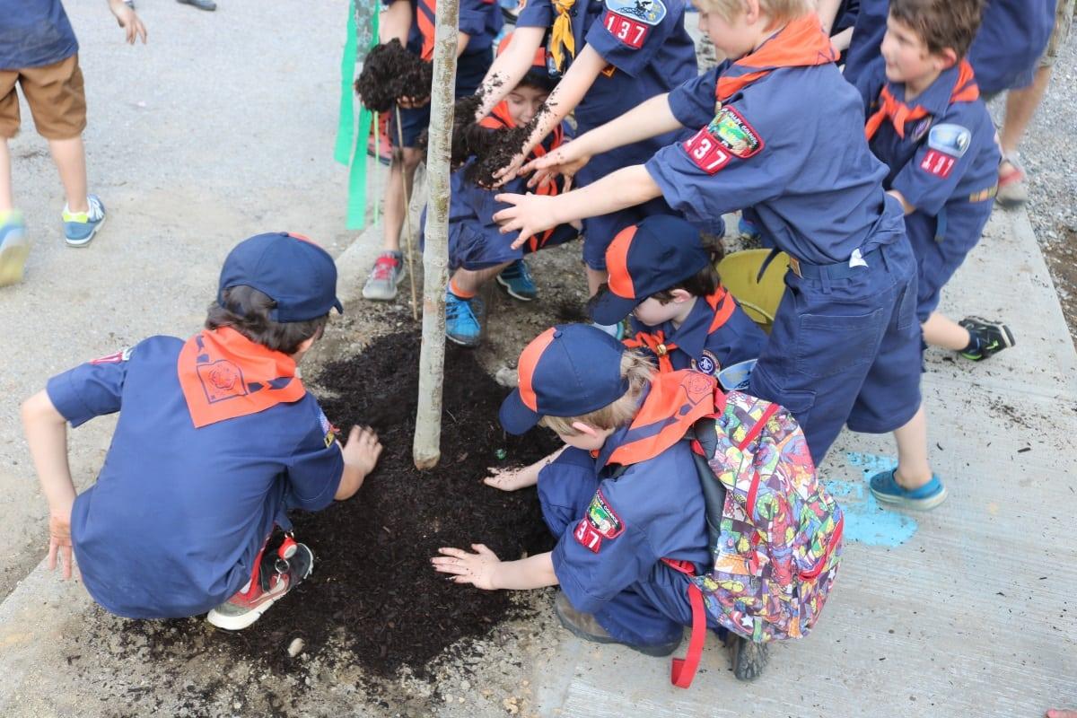 Arbor Day Mulching