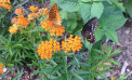 Roots and Shoots: The Monarchs Arrive!