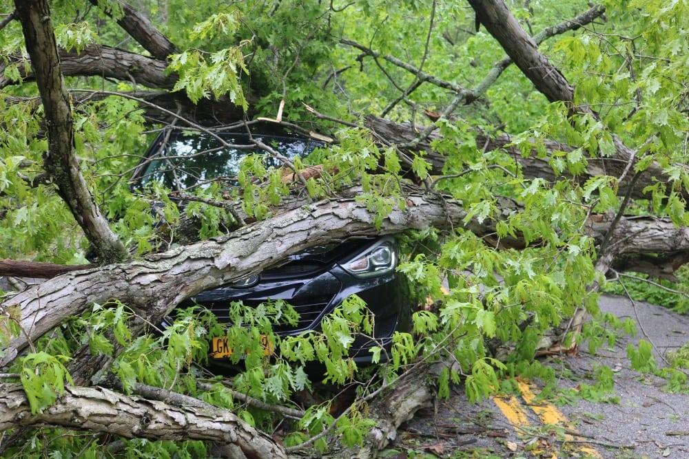 Crushed Car on Rte 403