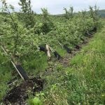 Rows of trees were uprotted at Fishkill Farms. (Photo provided)