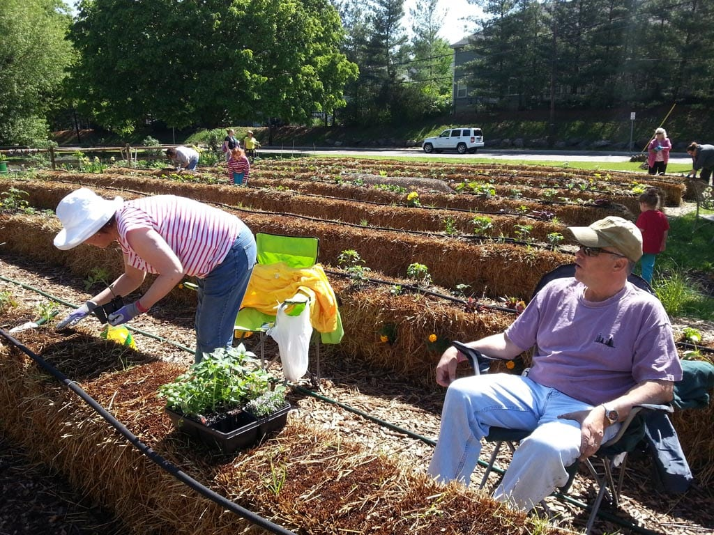 Roots and shoots a garden in a bale highlands current gardens for Straw bale gardening joel karsten