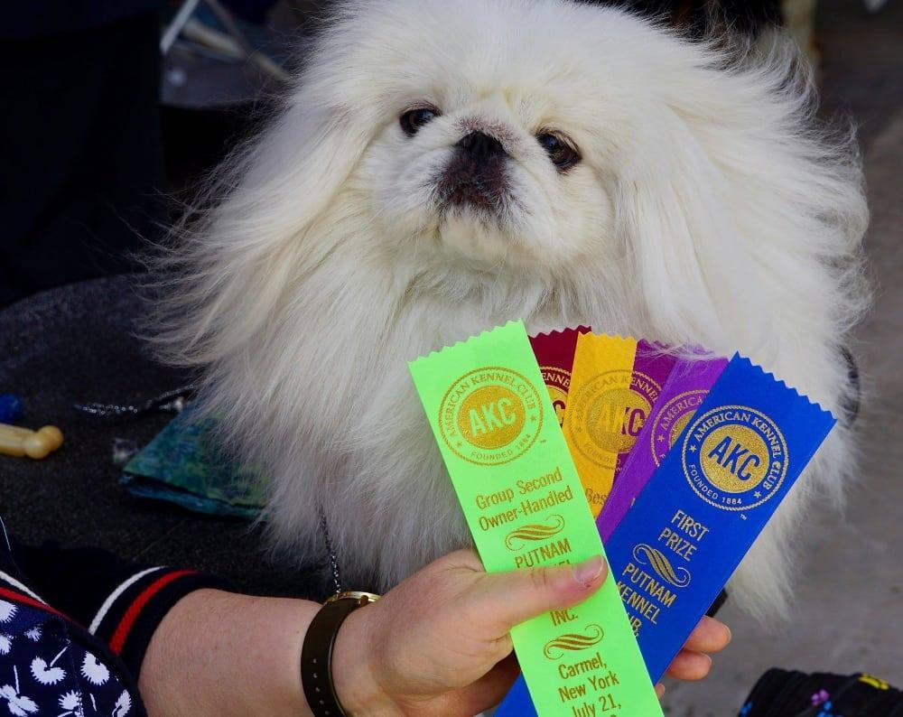 putnam kennel club dog show 2018 foxmoore