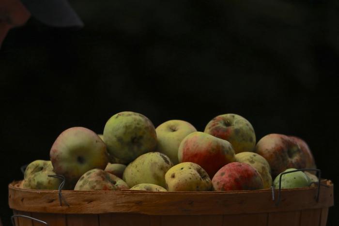 7U1A4617 -apple fest