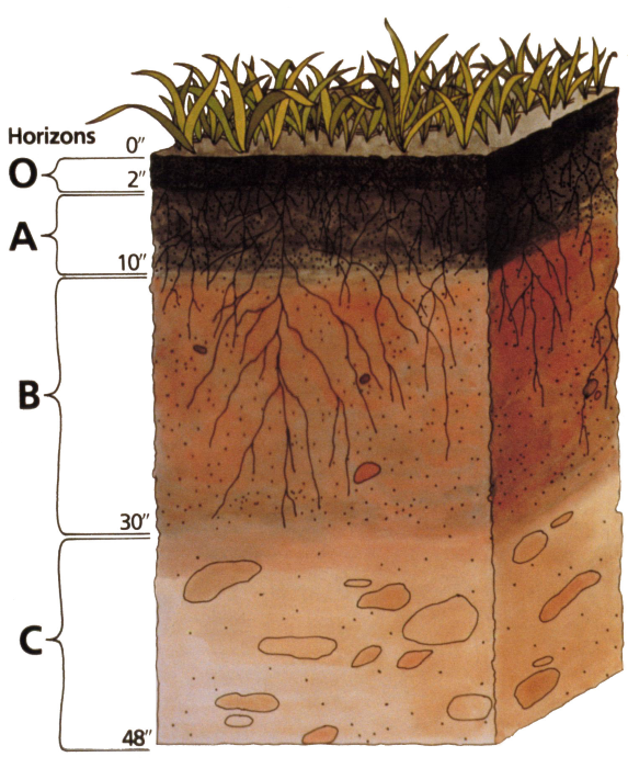 Know your soil layers (USDA)