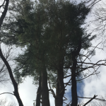 Roots and Shoots: Seeing the Tree in the Forest