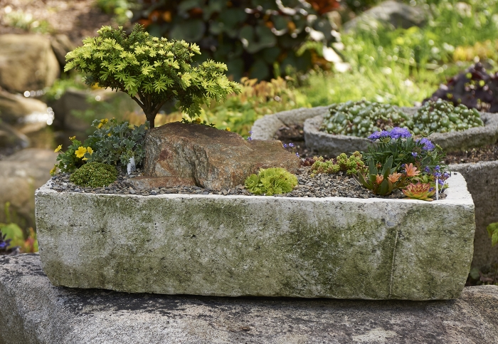 Roots And Shoots Timberline Vista Homemade Trough The