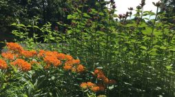 Roots and Shoots: Creating a Flower Forest Garden