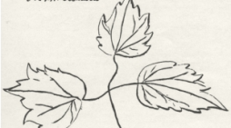 Roots and Shoots: Native Plants from Past to Present