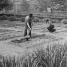 Letter: Victory Gardens