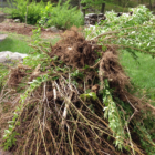 Roots and Shoots: A Pile of Sticks