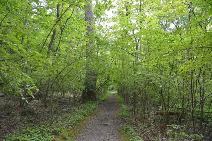 Nelsonville_Woods