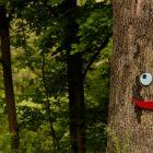 smile on tree