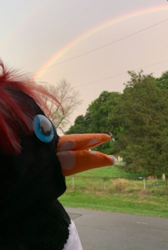 Punguin is in awe of a Beacon rainbow.