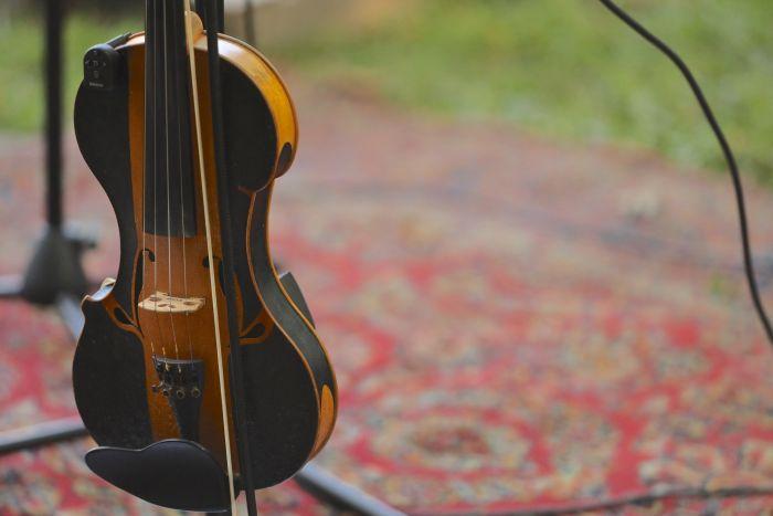 fiddle-653A5544