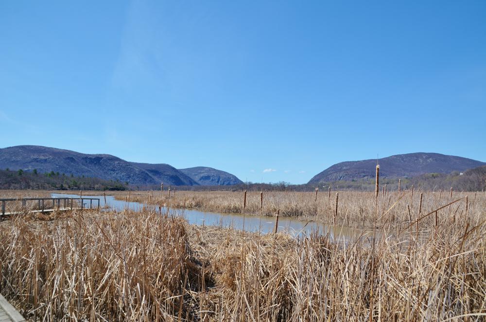 Audubon Constitution Marsh-boardwalk edge