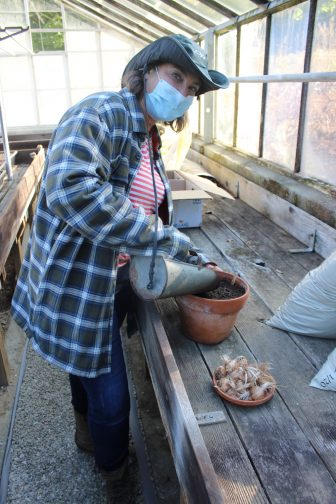 Hara Schwartz, watering a pot containing corms.