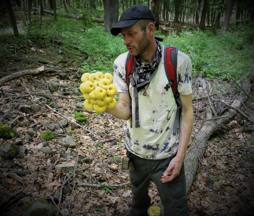 James O'Neill with foraged golden oyster mushrooms