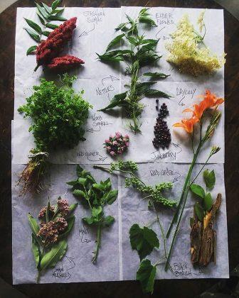 A sampling of foraged foods