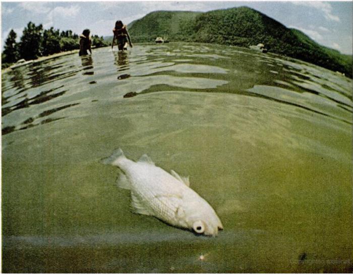 1970 Life photo