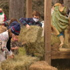 Placing hay in the creche