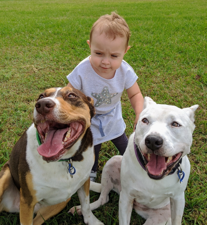 Addy and Her Doggies