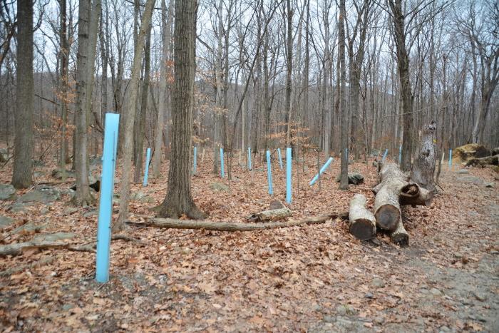 Nelsonville Woods-blue tubes