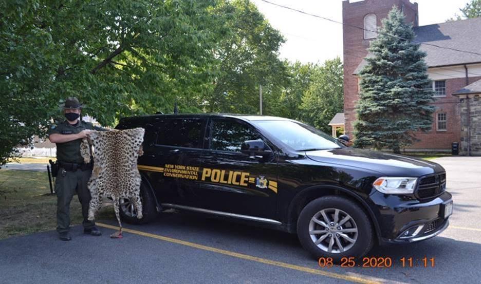 leopard-skin-seizure