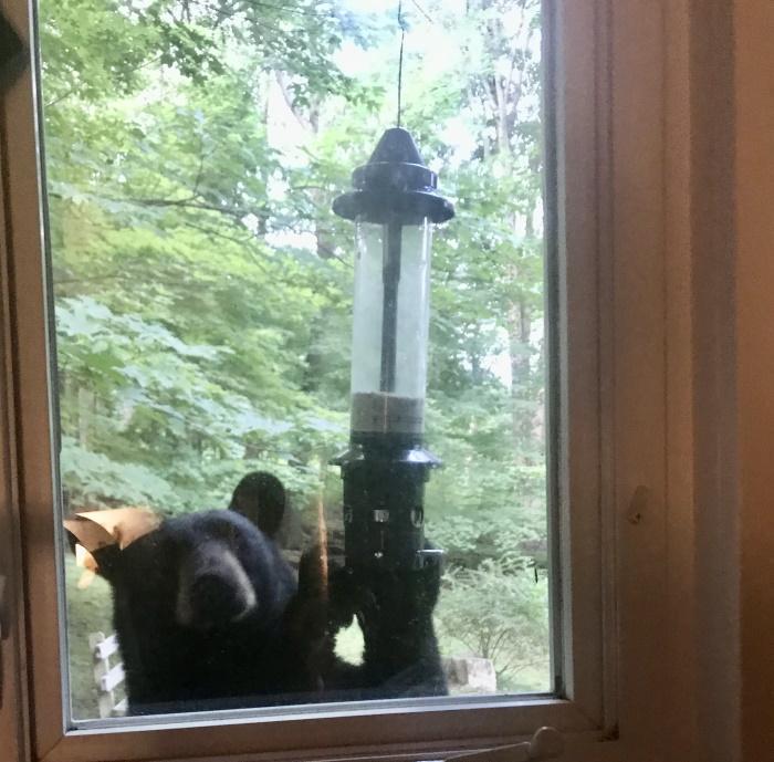 Garrison bear