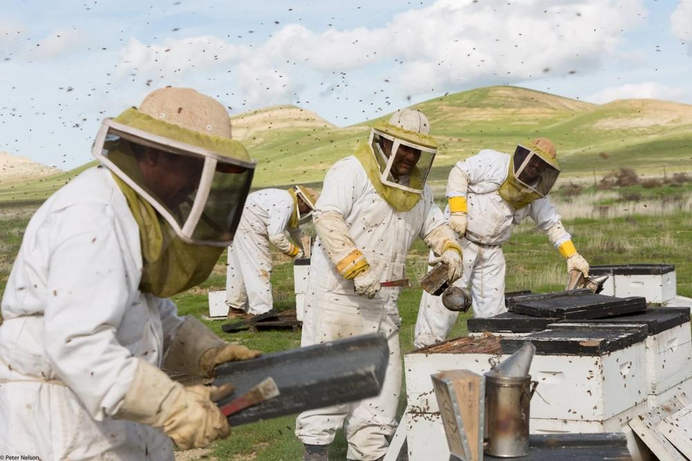 The Pollinators, Aug. 11