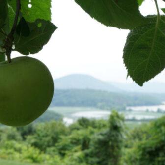 heritage apple fest
