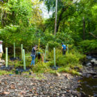 new creek plantings